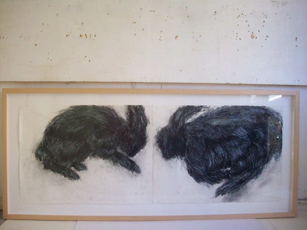 the ferals(dobell drawing prize -selected agnsw by Ana Young